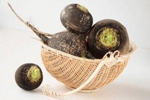 корнеплоды черной редьки