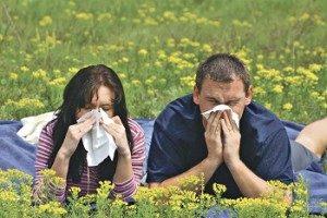 аллергия у родителей