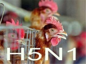 куриный грипп
