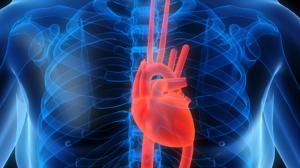 заболевание сердечной системы